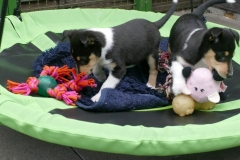Benji & Josie