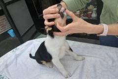 Besuch von unserer Tierärztin