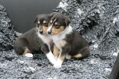 .... und mit der Schwester (By my Side (l) & Boogie (r)) kuscheln ....
