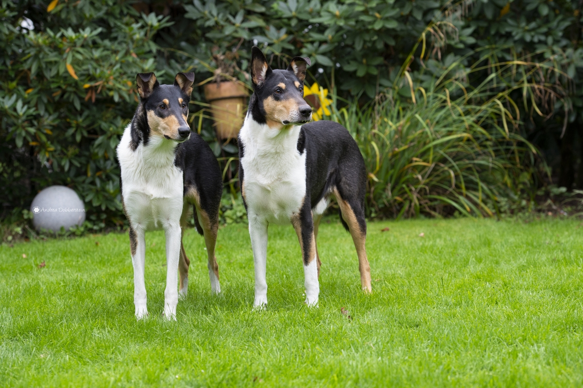 Rudi (l) & Oskar (r)