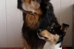 Benji mit Emmy - ganz aufmerksam