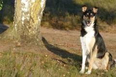 Josie in der Westruper Heide ....