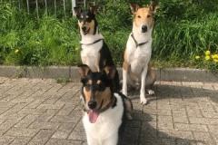 Mia und ihre Bodyguards - Findus (l) & Conner (r)